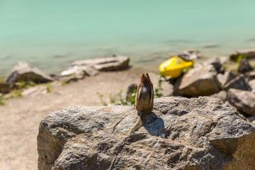 squirrel sitting on a rock at Lake Louise in summer banff canada- Stock Photo or Stock Video of rcfotostock | RC-Photo-Stock