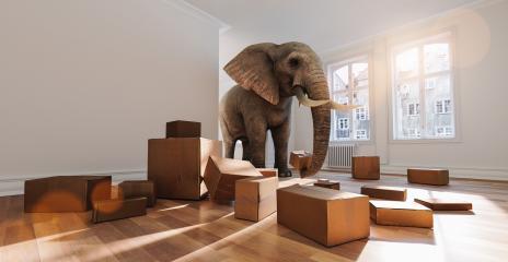 Starker Elefant mit Umzugskartons beim Umzug im Raum : Stock Photo or Stock Video Download rcfotostock photos, images and assets rcfotostock | RC-Photo-Stock.: