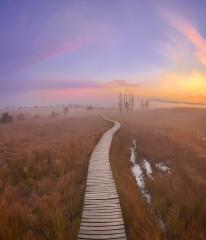 Steg im Hochmoor mit Nebel zum Sonnenaufgang, Hohes Venn, Belgien : Stock Photo or Stock Video Download rcfotostock photos, images and assets rcfotostock | RC-Photo-Stock.: