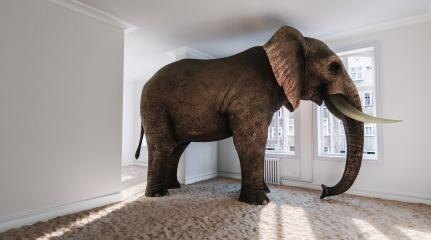 Strong elephant in the small room with beach sand on the ground as a funny space problem concept image : Stock Photo or Stock Video Download rcfotostock photos, images and assets rcfotostock | RC-Photo-Stock.: