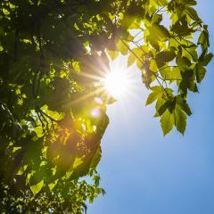 Sun beaming through treetops- Stock Photo or Stock Video of rcfotostock | RC-Photo-Stock