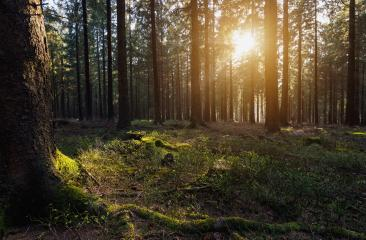 sun beams in the forest- Stock Photo or Stock Video of rcfotostock   RC-Photo-Stock
