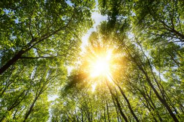 sun rays illumining deep forest treetop in spring : Stock Photo or Stock Video Download rcfotostock photos, images and assets rcfotostock | RC-Photo-Stock.: