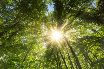sun rays illumining deep forest treetop in spring- Stock Photo or Stock Video of rcfotostock | RC-Photo-Stock