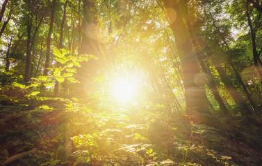 sun shines explosiv in to the forest : Stock Photo or Stock Video Download rcfotostock photos, images and assets rcfotostock | RC-Photo-Stock.:
