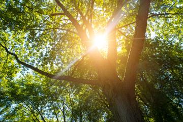 Sun shines explosive in to forest treetops- Stock Photo or Stock Video of rcfotostock | RC-Photo-Stock