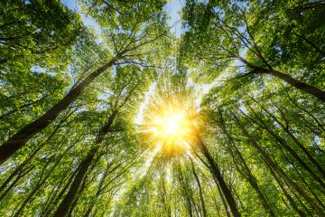 Sun shines explosive through treetop- Stock Photo or Stock Video of rcfotostock | RC-Photo-Stock