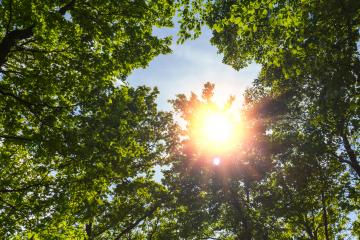 Sun shines through a hole in treetop- Stock Photo or Stock Video of rcfotostock | RC-Photo-Stock