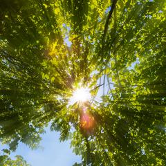 Sun shines through explosive treetops- Stock Photo or Stock Video of rcfotostock | RC-Photo-Stock