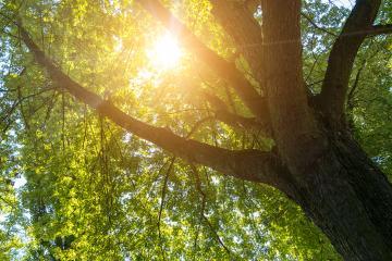 Sun shining between a treetop- Stock Photo or Stock Video of rcfotostock | RC-Photo-Stock