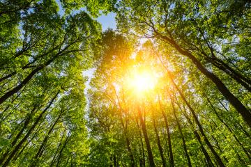 Sun shining in to the deep forest : Stock Photo or Stock Video Download rcfotostock photos, images and assets rcfotostock | RC-Photo-Stock.: