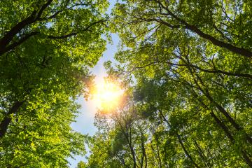 Sun shining through in to a beautifully spring forest : Stock Photo or Stock Video Download rcfotostock photos, images and assets rcfotostock | RC-Photo-Stock.: