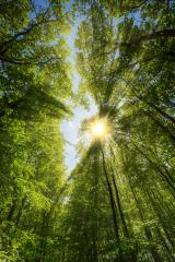 Sun shining through treetop- Stock Photo or Stock Video of rcfotostock | RC-Photo-Stock