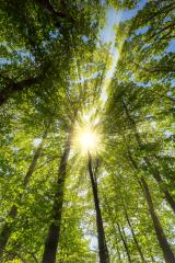 sun shining warmly through a forest in springtime- Stock Photo or Stock Video of rcfotostock | RC-Photo-Stock