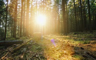 Sunbeams Shining through the Forest- Stock Photo or Stock Video of rcfotostock | RC-Photo-Stock
