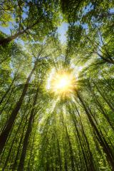 sunlight falling through a beautifully forest : Stock Photo or Stock Video Download rcfotostock photos, images and assets rcfotostock | RC-Photo-Stock.: