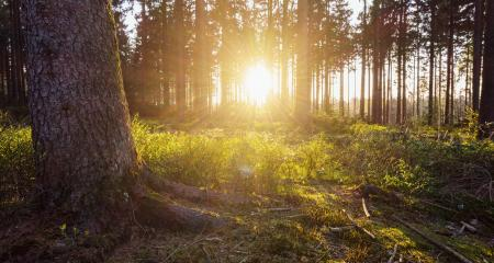 Sunlight in the green forest- Stock Photo or Stock Video of rcfotostock | RC-Photo-Stock