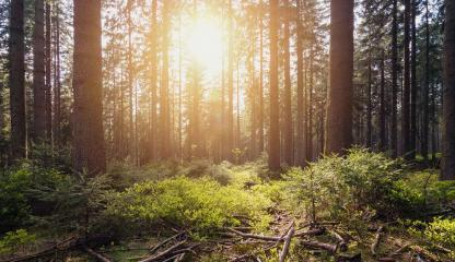 Sunlight shines in the green forest- Stock Photo or Stock Video of rcfotostock | RC-Photo-Stock