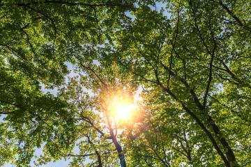 sunlight shining through treetops in srping : Stock Photo or Stock Video Download rcfotostock photos, images and assets rcfotostock | RC-Photo-Stock.: