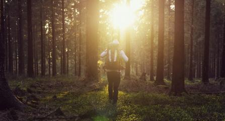 Sunny sunset in the woods with young hiker - Stock Photo or Stock Video of rcfotostock | RC-Photo-Stock