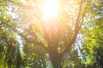 Sunrays shining between a treetop at spring - Stock Photo or Stock Video of rcfotostock | RC-Photo-Stock