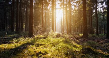 Sunrise Deep in the woods- Stock Photo or Stock Video of rcfotostock | RC-Photo-Stock