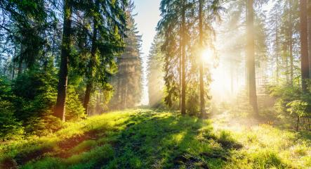 Sunrise in a beautiful Misty forest in Germany - Stock Photo or Stock Video of rcfotostock | RC-Photo-Stock