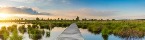 sunset at the Hautes Fagnes (bog landscape) panorama : Stock Photo or Stock Video Download rcfotostock photos, images and assets rcfotostock | RC-Photo-Stock.: