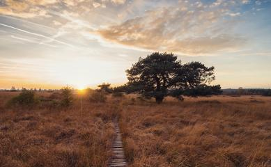 Sunset in the high Venn - Nature Park Eifel in germany- Stock Photo or Stock Video of rcfotostock | RC-Photo-Stock