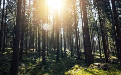 Sunshine forest trees - Peaceful outdoor scene- Stock Photo or Stock Video of rcfotostock | RC-Photo-Stock