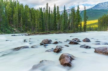 Sunwapta River with island at the jasper national park canada : Stock Photo or Stock Video Download rcfotostock photos, images and assets rcfotostock | RC-Photo-Stock.: