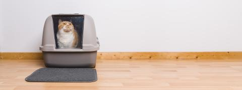Tabby cat sitting in a litter box and look to the camera, banner size, copyspace for your individual text.- Stock Photo or Stock Video of rcfotostock | RC-Photo-Stock