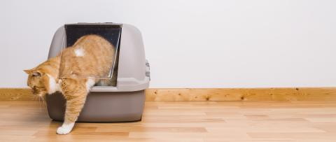 Tabby cat step outside a litter box after poops or pee, banner size, copyspace for your individual text.- Stock Photo or Stock Video of rcfotostock | RC-Photo-Stock
