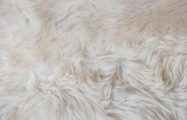 Texture of white shaggy fur- Stock Photo or Stock Video of rcfotostock | RC-Photo-Stock