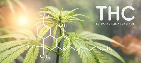 THC formula. tetrahydrocannabinol molecule structure compound with plant. Medical marijuana molecules, cannabidiol biochemistry formula. Chemistry addiction- Stock Photo or Stock Video of rcfotostock | RC-Photo-Stock