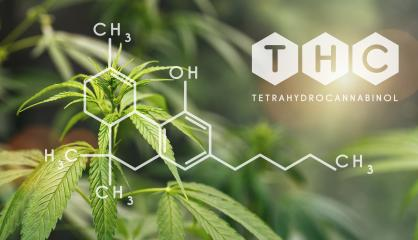 THC Structural Formula, Cannabis Industry, Growing Marijuana, Pharmacy Business, CBD Elements and THC in Marijuana, Marijuana and Medical Marijuana Health : Stock Photo or Stock Video Download rcfotostock photos, images and assets rcfotostock | RC-Photo-Stock.:
