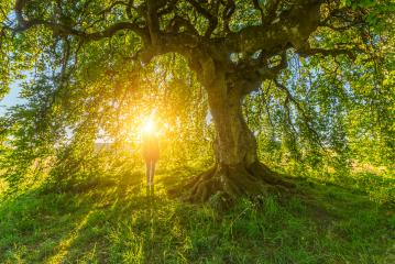 the girl under the old Dwarf Beech  : Stock Photo or Stock Video Download rcfotostock photos, images and assets rcfotostock | RC-Photo-Stock.: