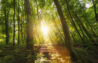 The sun beautifully illuminating the Forest - Stock Photo or Stock Video of rcfotostock | RC-Photo-Stock