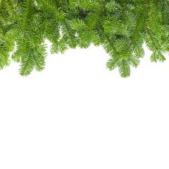 tight fir branches- Stock Photo or Stock Video of rcfotostock | RC-Photo-Stock