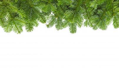 tight fir branches for chistmas- Stock Photo or Stock Video of rcfotostock | RC-Photo-Stock