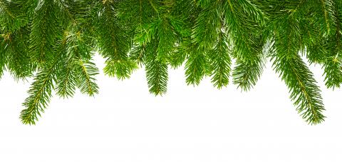 tight fir branches for christmas- Stock Photo or Stock Video of rcfotostock | RC-Photo-Stock