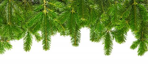 tight fir branches in a line  : Stock Photo or Stock Video Download rcfotostock photos, images and assets rcfotostock   RC-Photo-Stock.: