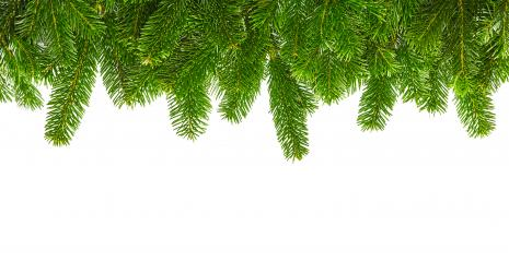 tight fir branches in a line- Stock Photo or Stock Video of rcfotostock | RC-Photo-Stock