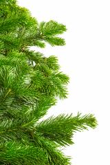 tight fir branches in a row- Stock Photo or Stock Video of rcfotostock | RC-Photo-Stock