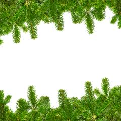 tight fir branches lines on white- Stock Photo or Stock Video of rcfotostock | RC-Photo-Stock