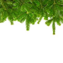 tight fir branches on white- Stock Photo or Stock Video of rcfotostock | RC-Photo-Stock