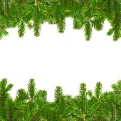 Tow lines of fir branches- Stock Photo or Stock Video of rcfotostock | RC-Photo-Stock