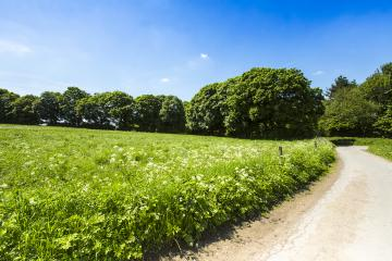 trail in a summer landscape with forest : Stock Photo or Stock Video Download rcfotostock photos, images and assets rcfotostock | RC-Photo-Stock.: