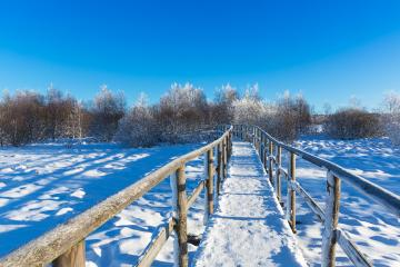 trail in to a frozen bog winter landscape at the Hautes Fagnes- Stock Photo or Stock Video of rcfotostock | RC-Photo-Stock