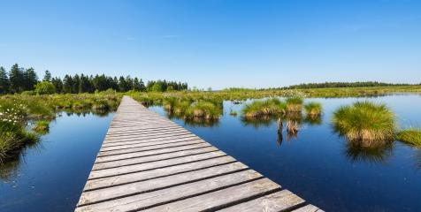 trail over a bog pond at the High Fens (Hautes Fagnes) : Stock Photo or Stock Video Download rcfotostock photos, images and assets rcfotostock | RC-Photo-Stock.:
